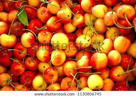 Stockshutter Cherry