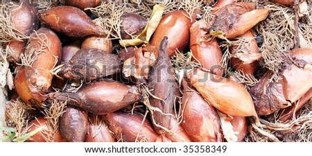 a pile of rotting onions in the soil covered in dust and a cobweb and old leaves