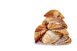 a pile of seashells isolated on a white background