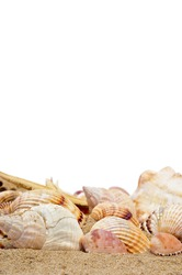 a pile of seashells on the sand on a white background