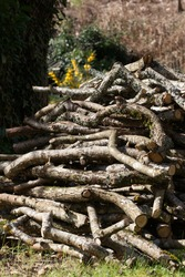 A pile of spruce, cherry wood and oak piled hing in 1 meter lengths ready for logging and splitting. Drying in the summer sunshine
