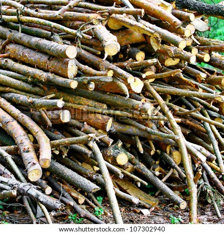 A pile of twigs firewood in forest
