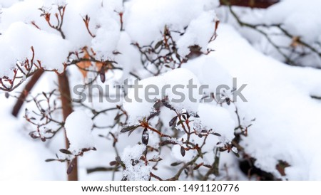 a pile of white frozen snow winter cover all the top of leaves and branches of tree plant background in Osaka, Japan #1491120776