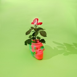 A pink and white rose with fresh green leaves growing from a pink and green scull. Horror fantasy Halloween concept.