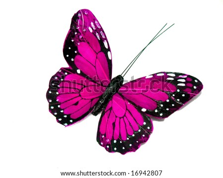 A pink butterfly isolated on white