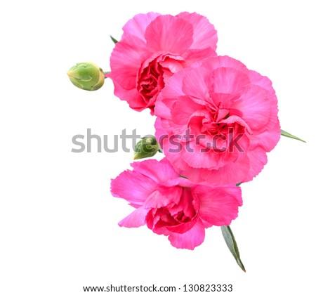 A pink carnation bouquet