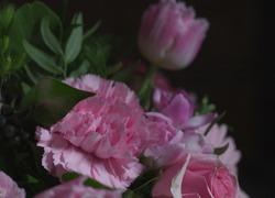 A pink carnation nestled behind some green leaf.