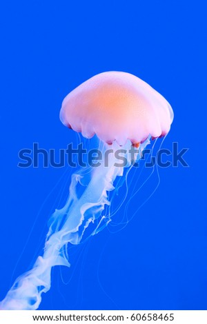 a pink colored jelly-fish against a blue background