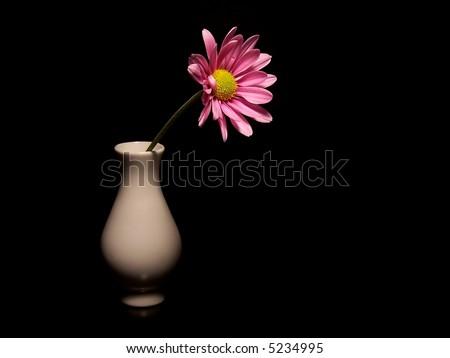A pink daisy in a small white vase on a black background.  The flower is coming out of the vase towards the right and the base of the vase is partially in the shadows.  Black background.