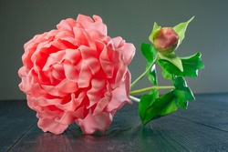 A pink peony is lying on a dark table. Flower with a Bud on a dark background. Blooming peony with Terry petals. Garden flowers. Peony blooms.
