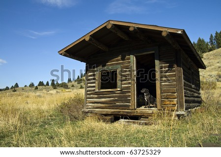 A Pit Bull Terrier guards the entrance of an old homestead in Montana