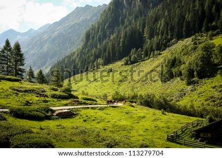 a pittoresque green valley in the austrian alps, zillertal