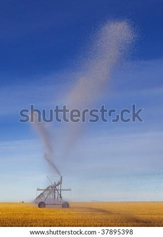 A pivot in a wheat field spraying water towards the viewer