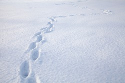 A plane flat field covered with deep snow and one person footprints in it