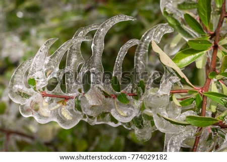 a plant covered with ice #774029182