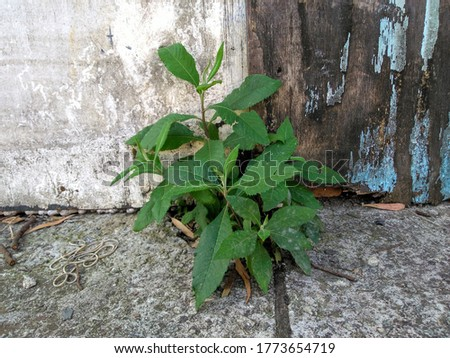 a plant next to an old wooden fence