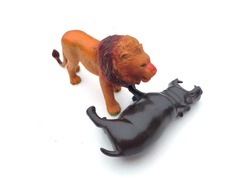a plastic children toys lion fight with hippopotamus isolated on white background