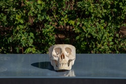 a plastic skull lies on a gray bench in parks in the sun