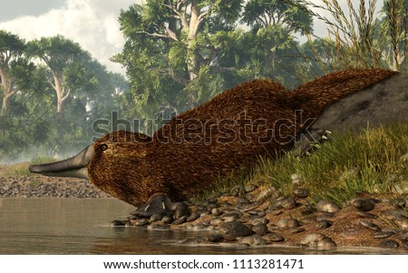 A platypus scans the surface of the lake from a rocky shore before taking a swim.