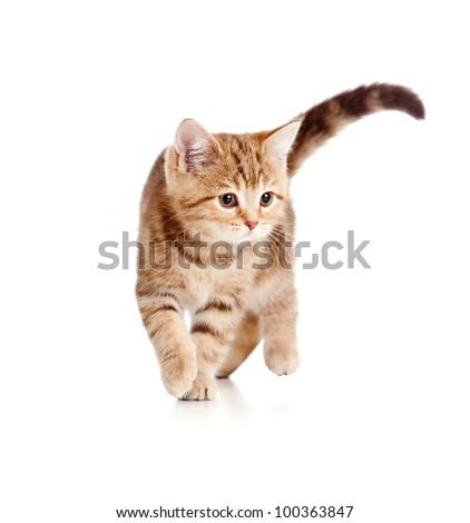 A playful running kitten