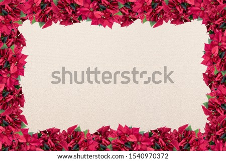 A poinsettia flower frame over a white surface - great for framing a romantic picture or text