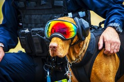 A police/army dog with goggle on the eyes, black detective dog with police/military with protection costume, dog is of German shepherd breed