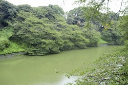 A Pond And Green