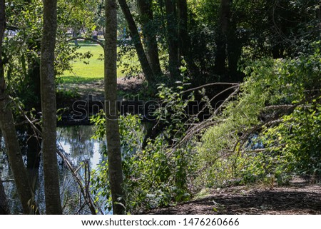 a pond edged with birch trees and brush in grassy park