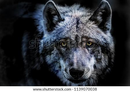 a portrait of a dangerous wolf
