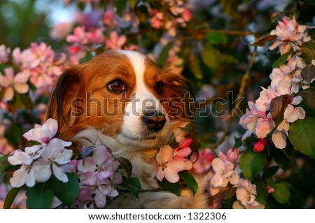 A portrait of a dog surrounded with beautiful pink blossoms