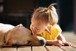 A portrait of a little cute toddler girl kissing her dog, a yellow labrador relaxing on the wooden deck in the sun