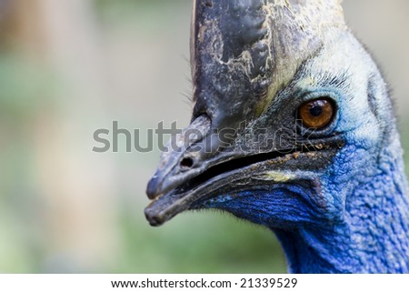 a portrait of an ugly bird