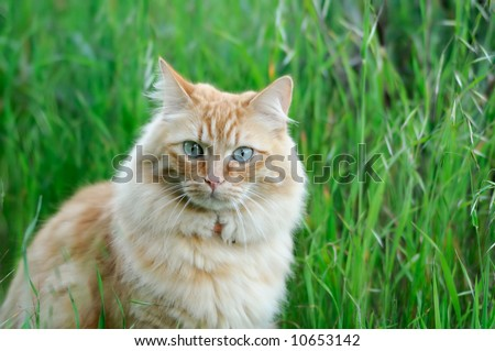 A portrait of domestic cat sitting in fresh spring grass