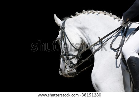 A portrait of gray dressage horse isolated on black
