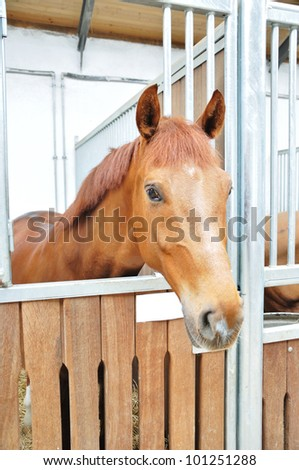 A portrait of horse in barn behind cage