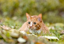 a portrait of one mixed breed cat on the grass in the woods on a warm sunny day