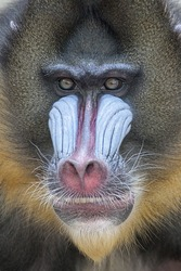 A portrait of primate