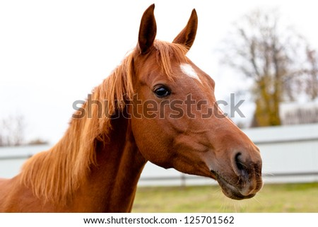 A portrait of red horse