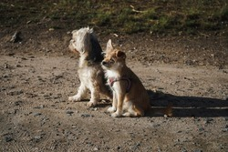 A portrait photo of two dogs sitting as best friends in the evening sun.