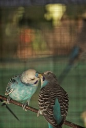 A Portrait shot of two love birds sharing their food