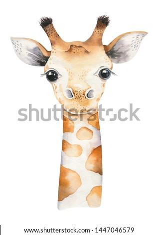 A poster with a baby giraffe. Watercolor cartoon giraffe tropical animal illustration. Jungle exotic summer design Foto stock ©