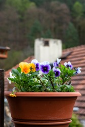 A pot of pansy flowers stands on the balcony, against the backdrop of a tiled roof