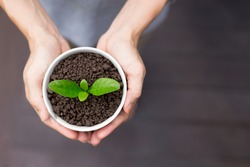 A pot of plant on hands, New life concept