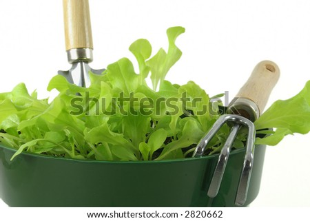 A pot of young lettuce seedlings with a garden trowel and rake.