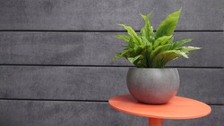A pot with a green plant on the background of a gray wall. Decorative pot with a flower on a wall background.