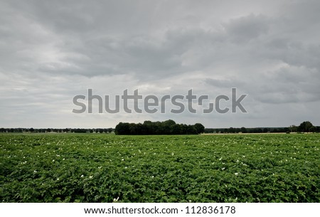 A potato field in the netherlands on a cloudy day.