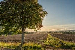 A potato field ready for harvest in rural Perthshire, Scotland on a sunny autumn day