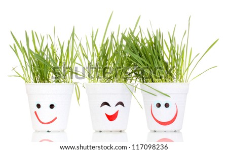 A pots of grass isolated on white