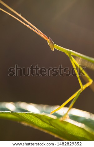 A praying mantis on grass with dramatic light #1482829352