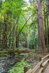 A pretty bridge over the Redwood Creek in Muir Woods, while taking a peaceful walk